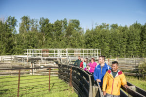 A group enjoys the Bison Backstage tour, walking through the Plains Bison Handling Facility